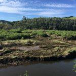 Estuary of Oyambre – september 2019 – Study site