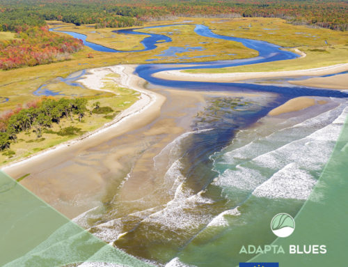 The LIFE Adaptablues project has vegetated estuary ecosystems (EVE) to reduce the impact of climate change on coastal areas.