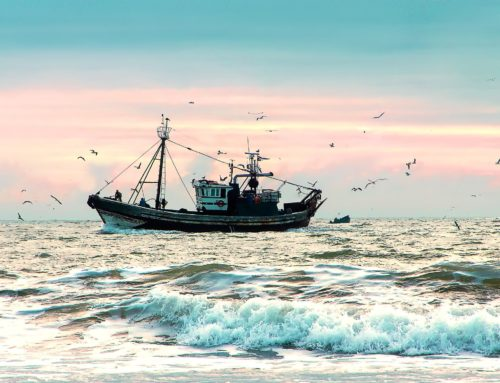 Estuary Ecosystems can increase adaptation to climate change…