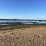 Study site in the Mondego estuary – Mondego estuary – 2019