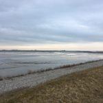 Westerschelde estuary – Perkpolder - 2019