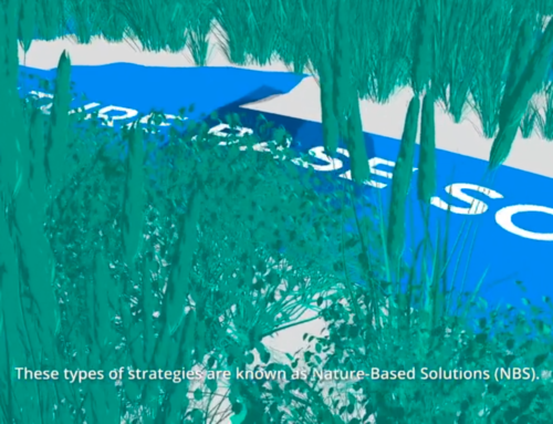 TNC seeks an analyst for nature-based solutions case studies and risk financing